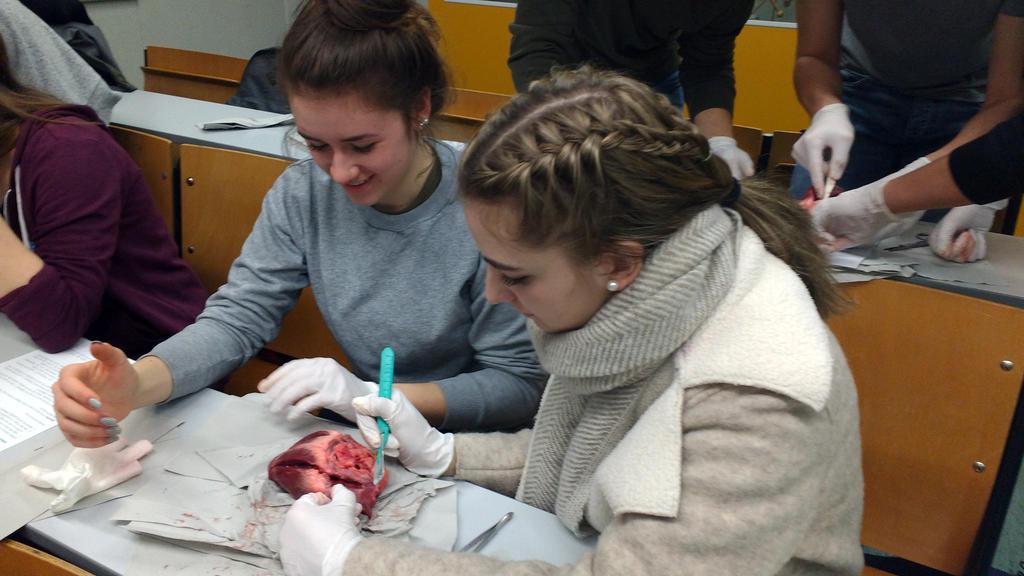 JCRG - schee Schneiden, tupfen, klammern – Untersuchung von Schweineherzen und Schweinelunge in der 10c